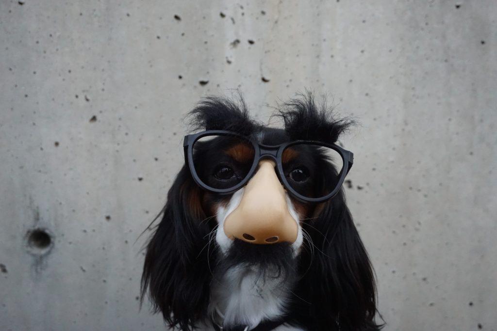 嗅覚を強調した犬の写真